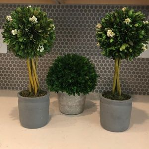 Boxwood Topiary Collection (3)